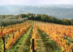 Own a Vineyard and live the dream 7