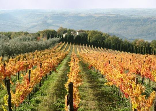Own a Vineyard and live the dream 16