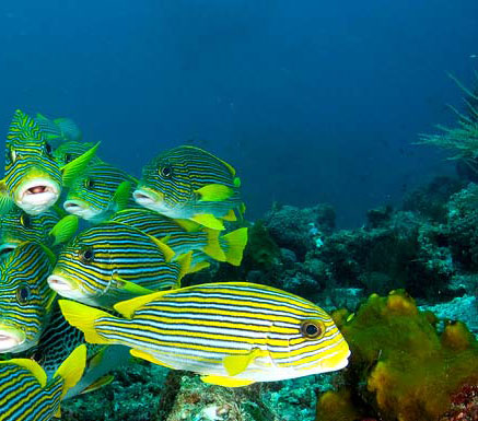 Dive Instructor Richard Smith talks about luxury diving in Malaysia 3