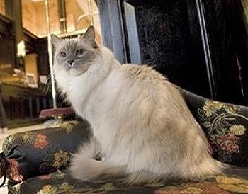 The Algonqueen Cat Matilda Returns to The Algonquin Hotel in Manhattans Club Row. 4