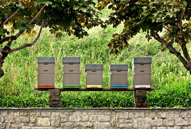 Jaeger-LeCoultre launches Honey from the Vallée de Joux.