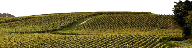 The uniqueness of De Roval champagne stems from the subtle assembly of its component parts. Its rich bouquets have evolved from the wise collection of vines located in 11 communes of two prestigious Champagne regions: the Côte des Blancs and the Vallée de la Marne.