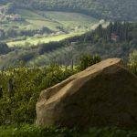 Santa Margherita Wine Group - 80 years of Italian history in a wine bottle 5