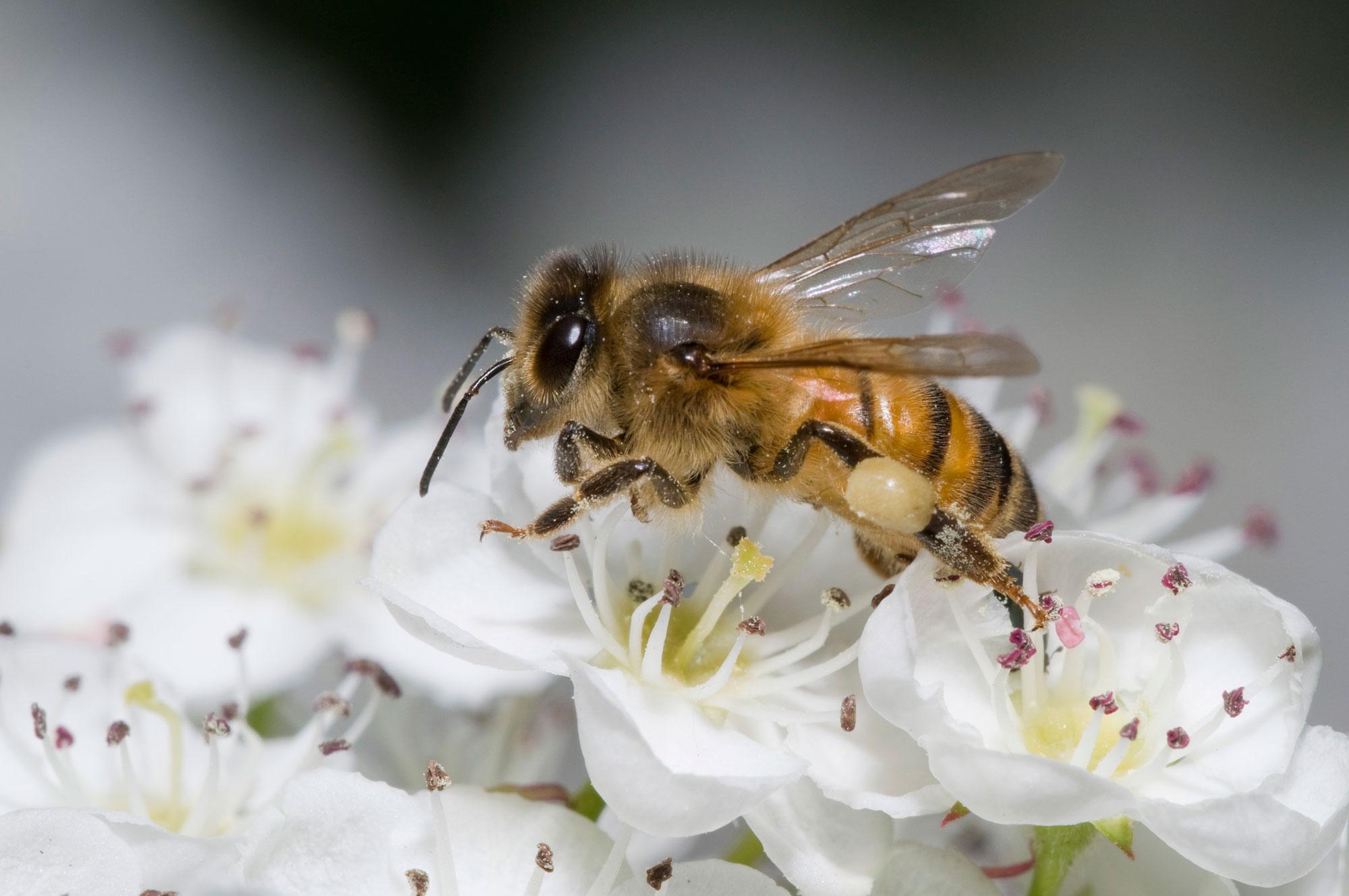 The London Honey Show 2015 Creates a Buzz - Photograph by Richard Twilton.