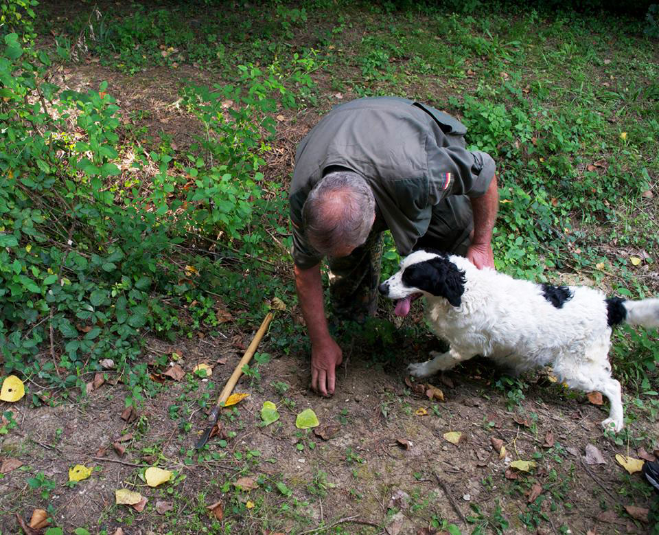 We'll arrange a truffle hunting experience and cooking course on how to prepare them