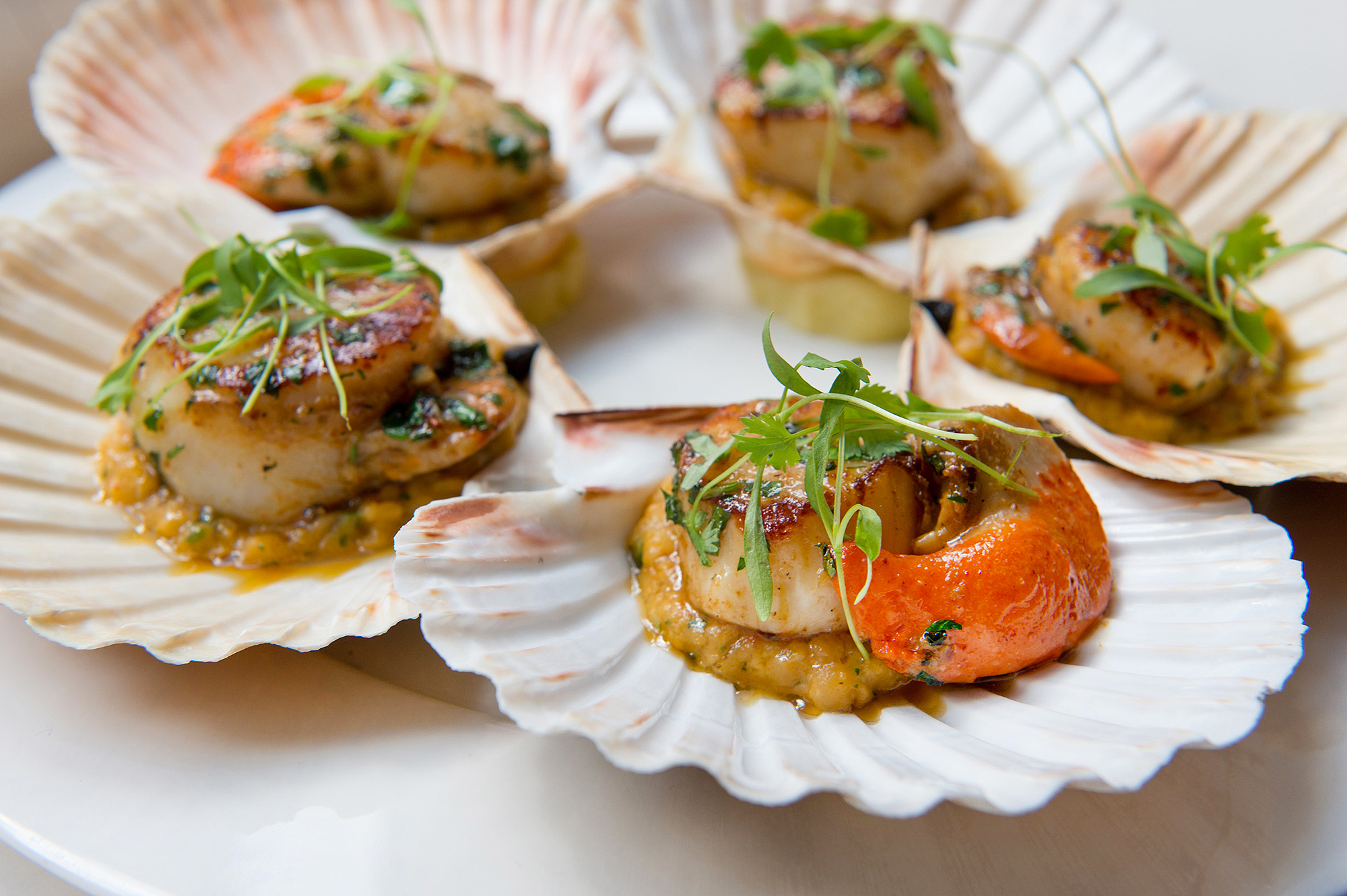 Seared Isle of Skye scallops with spiced lentils and coriander at 108 Brasserie