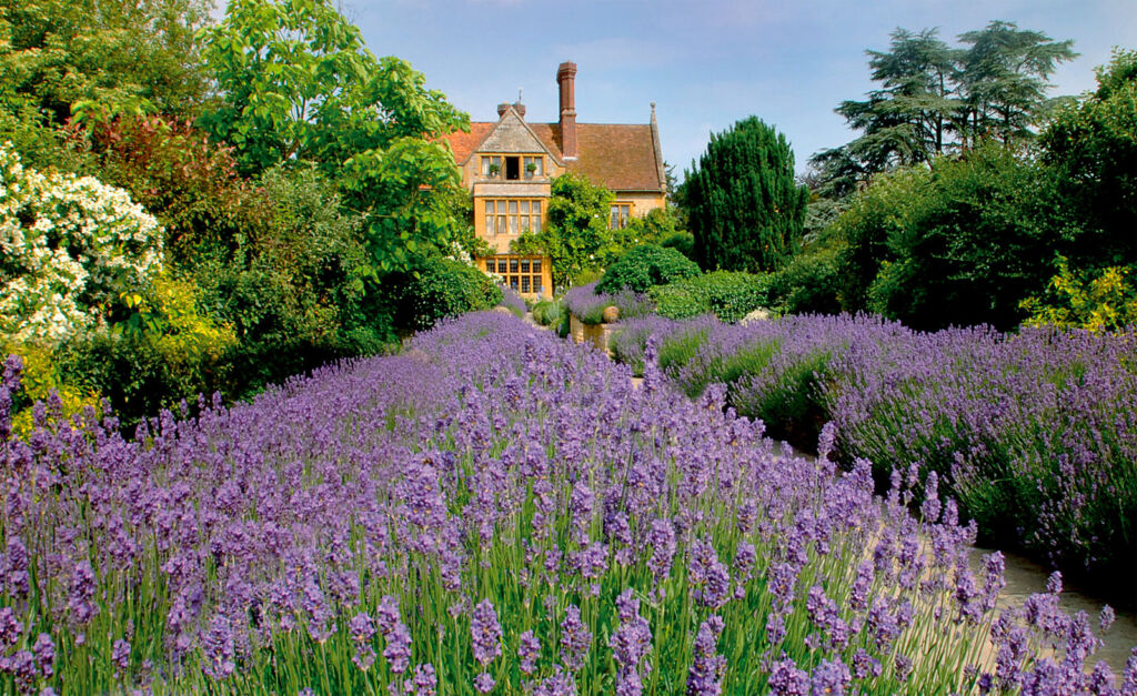 The beautiful purple flowers at the front of Le Manoir