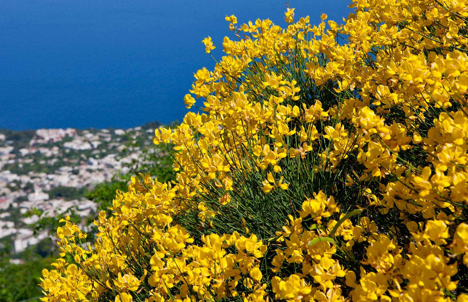 Island-of-Capri
