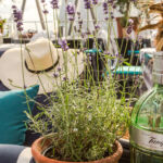 We Go Sky-High In Searcys Summer Pop-Up At London's Gherkin 6