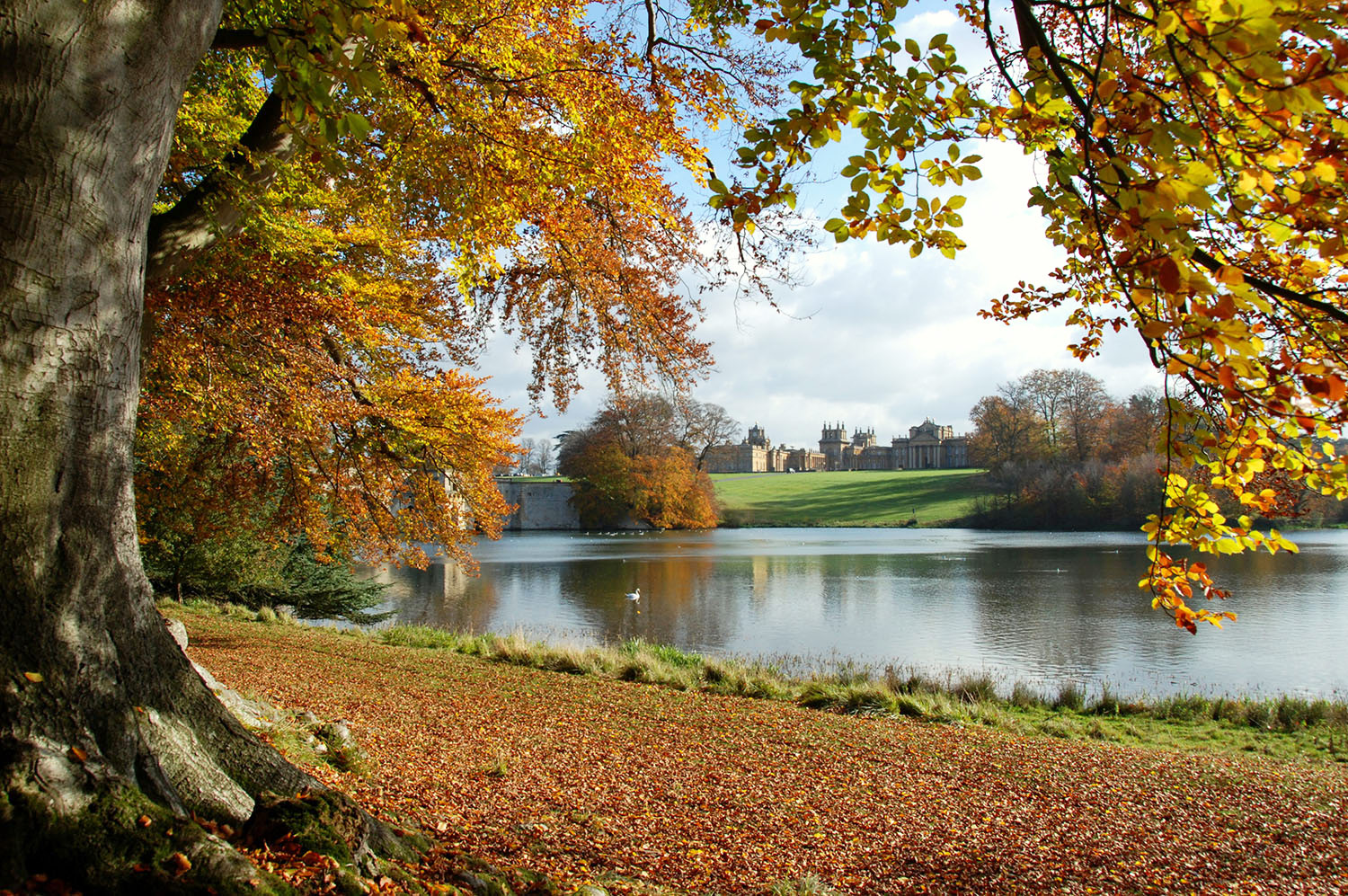 Experience Autumn In Its Full Majesty At Blenheim Palace