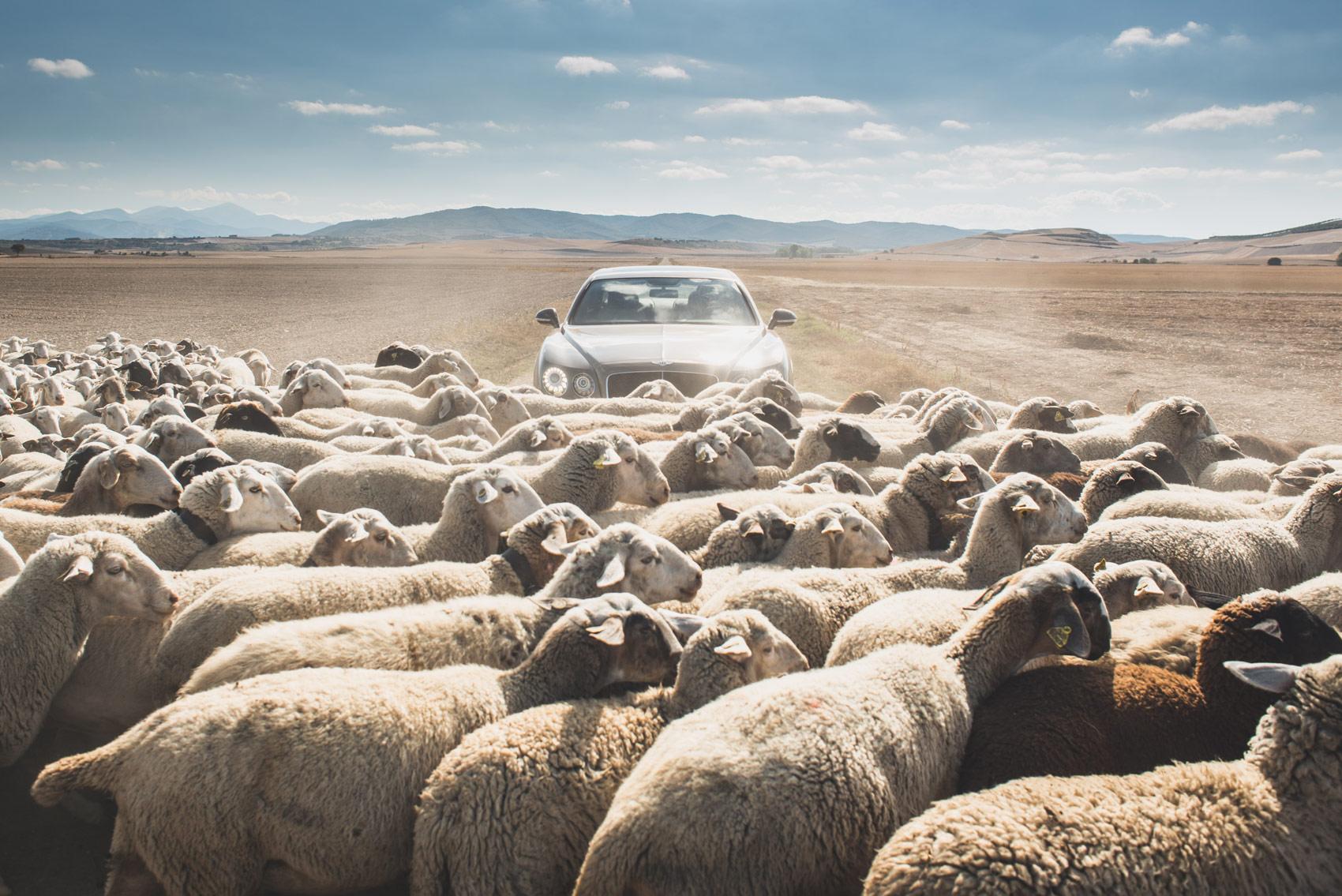 bentley-fs-sheep-and-car