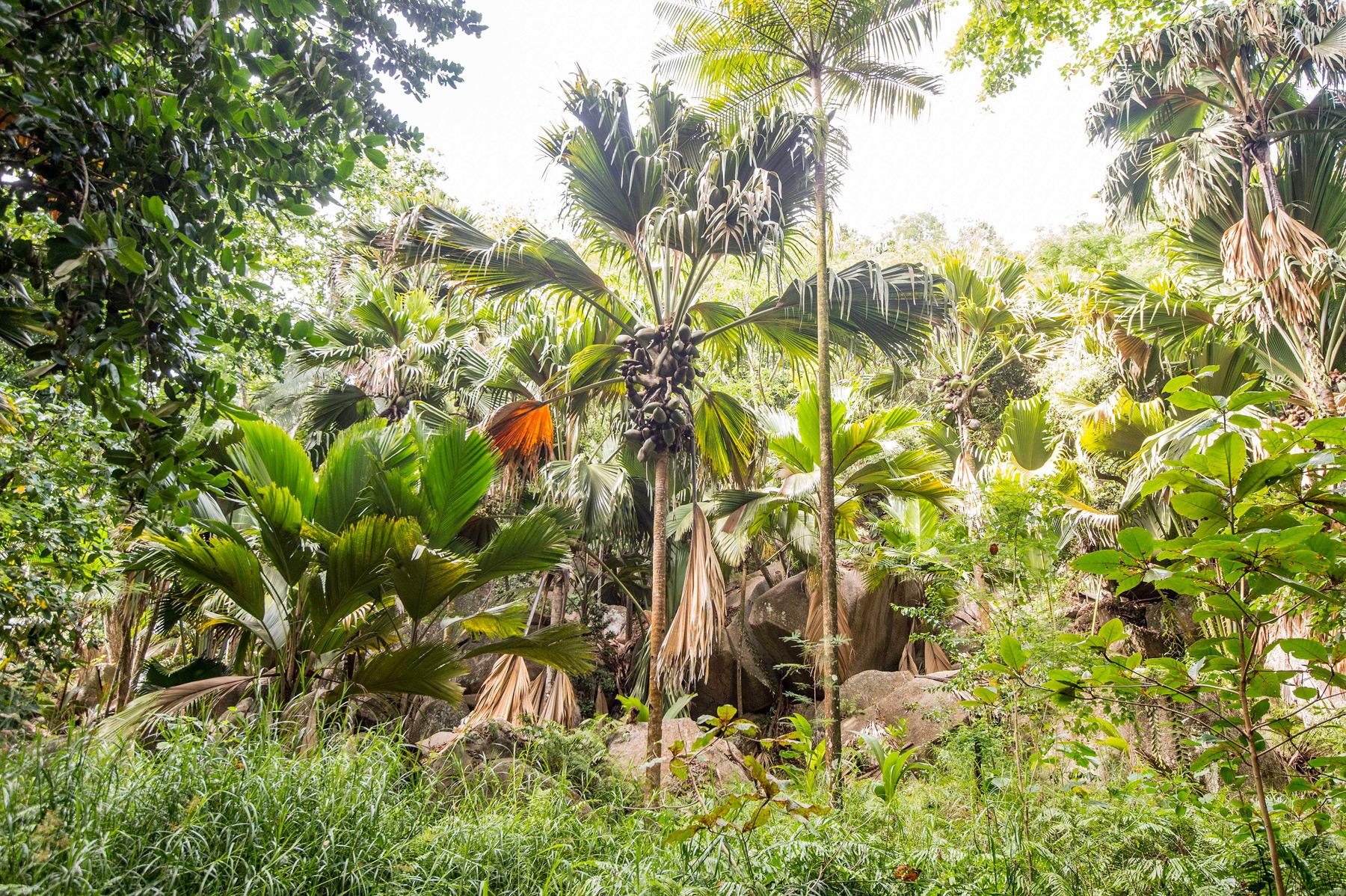 Seychelles-flora
