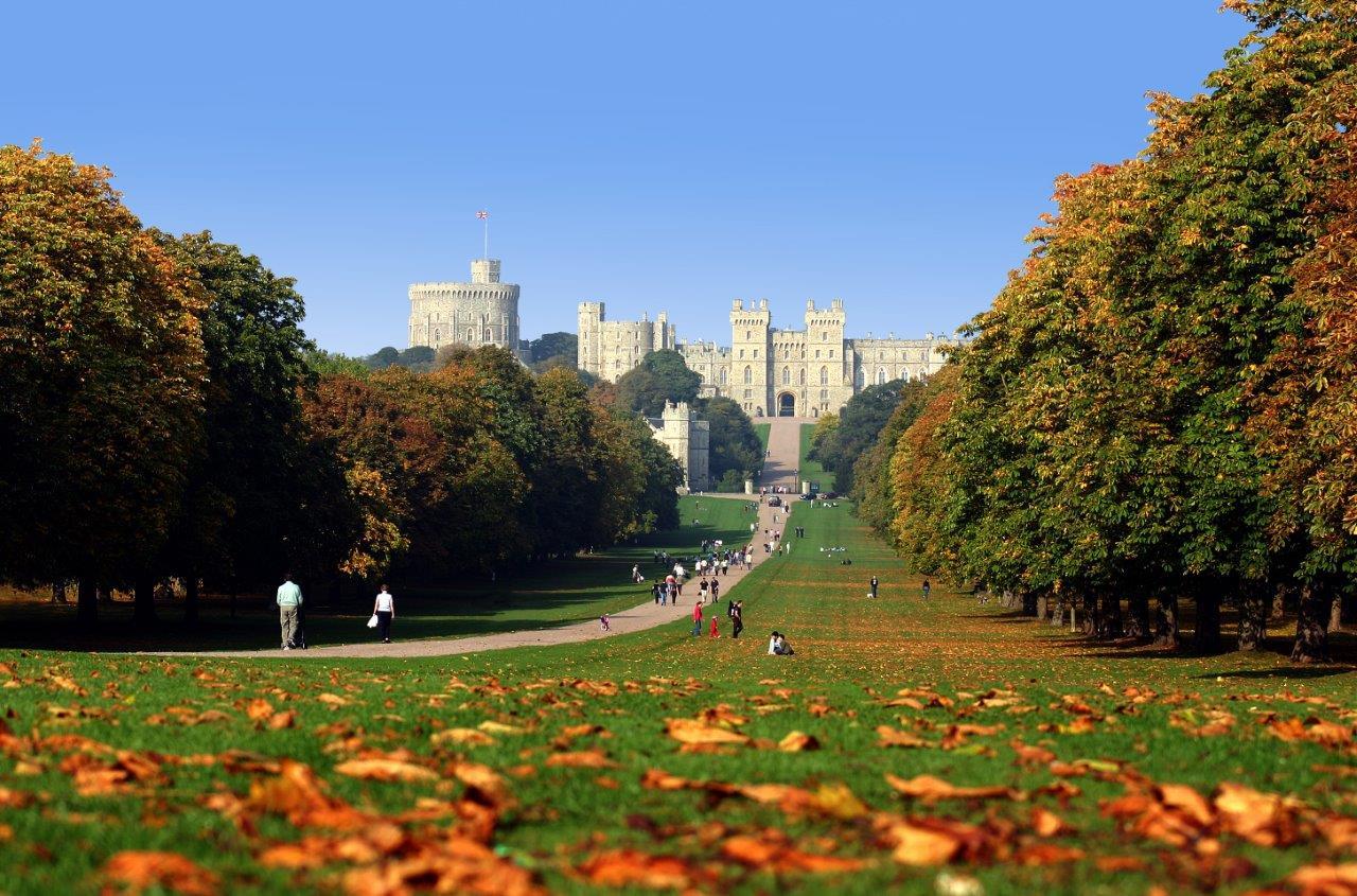 Windsor Great Park Long Walk in Autumn by Elaine Robertson