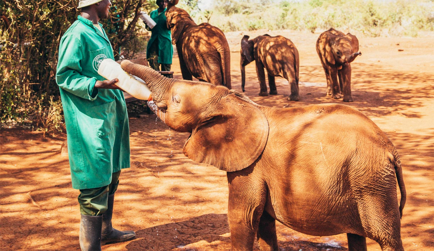 Interview with Angela Sheldrick, CEO of the David Sheldrick Wildlife Trust