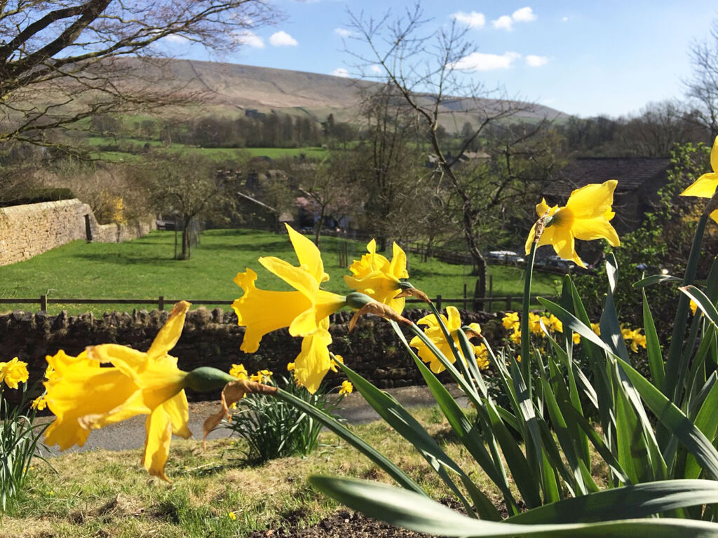 Daffodils in bloom at Downham