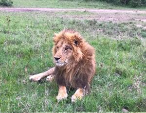 A Once-In-A-Lifetime Experience At Fairmont Mara Safari Club 1