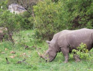 A Once-In-A-Lifetime Experience At Fairmont Mara Safari Club 2