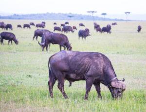 A Once-In-A-Lifetime Experience At Fairmont Mara Safari Club 3