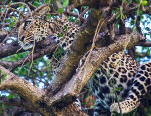 A Once-In-A-Lifetime Experience At Fairmont Mara Safari Club 4