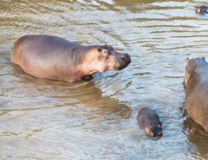 A Once-In-A-Lifetime Experience At Fairmont Mara Safari Club 5