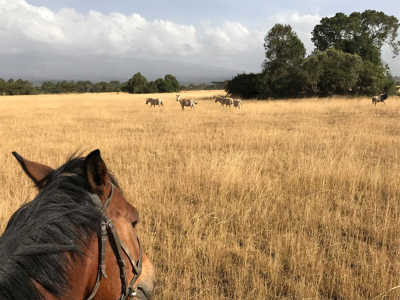 On horseback watching the Zebras
