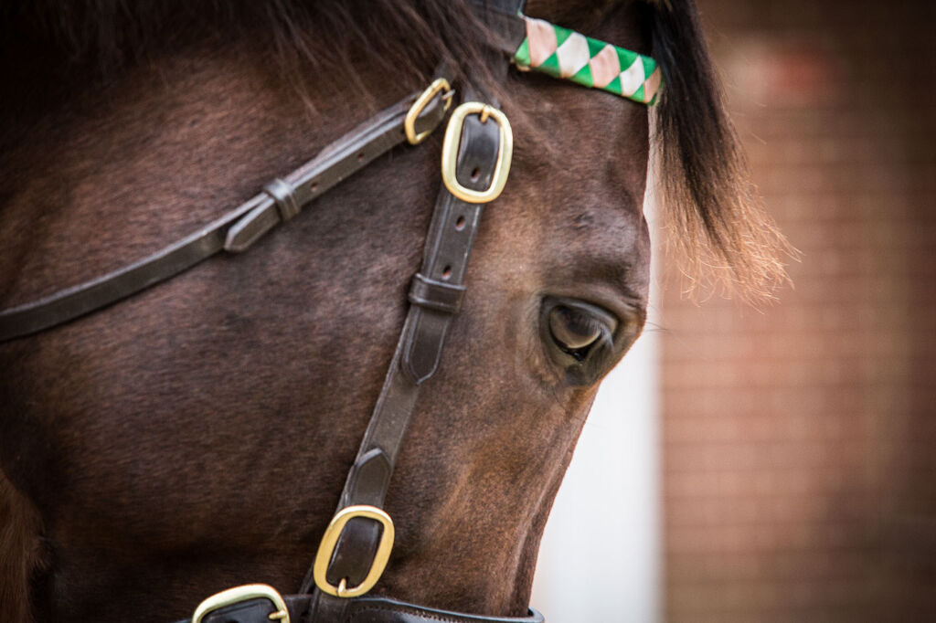 Meet The World's Greatest Racehorse, Frankel On A Very Special Tour