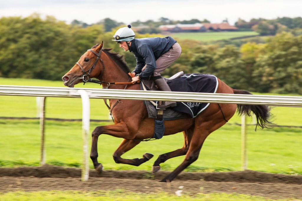 Warren Hill gallops