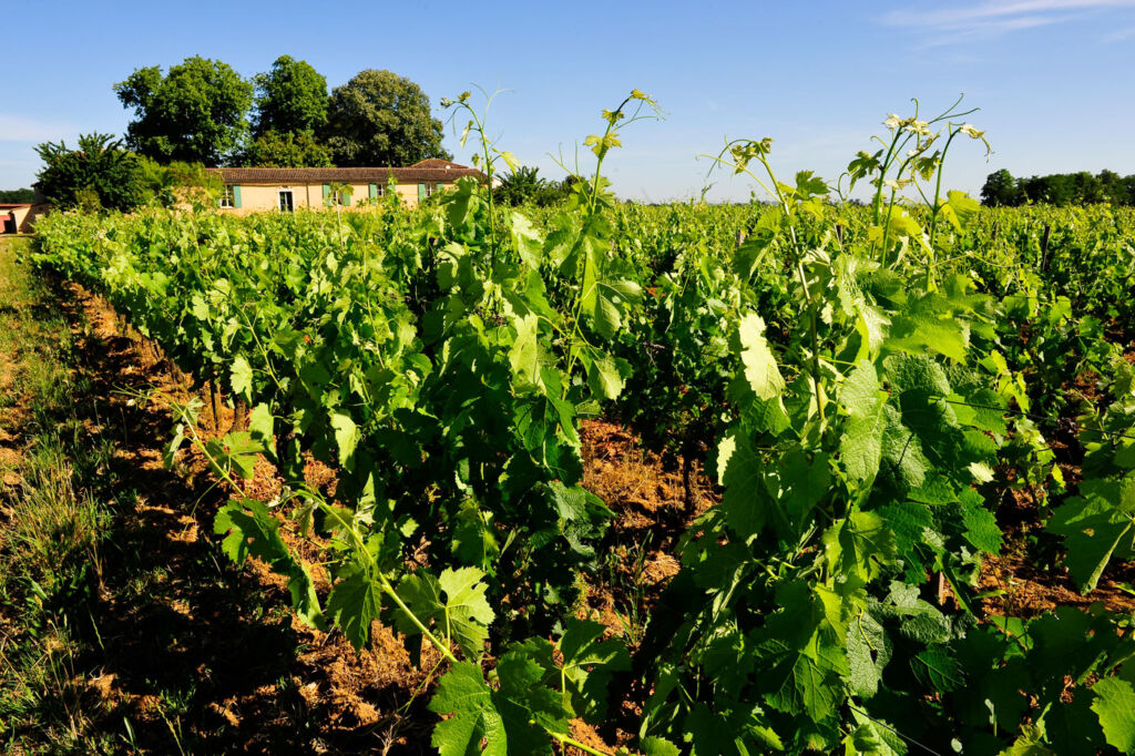 Bordeaux Vineyards Lead The Way in Sustainable Viticulture 4