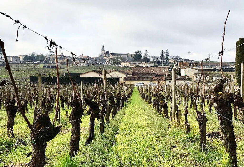 Bordeaux Vineyards Lead The Way in Sustainable Viticulture 5