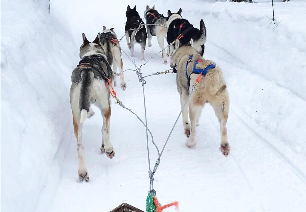 Finnish Lapland Adventure - 5-Day Safari to Yllas, Levi and Rovaniemi 8