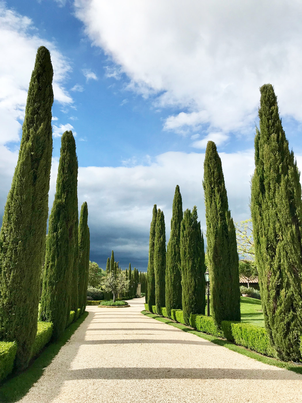 The stunning tree-lined entrance to Borgo Santo Pietro.