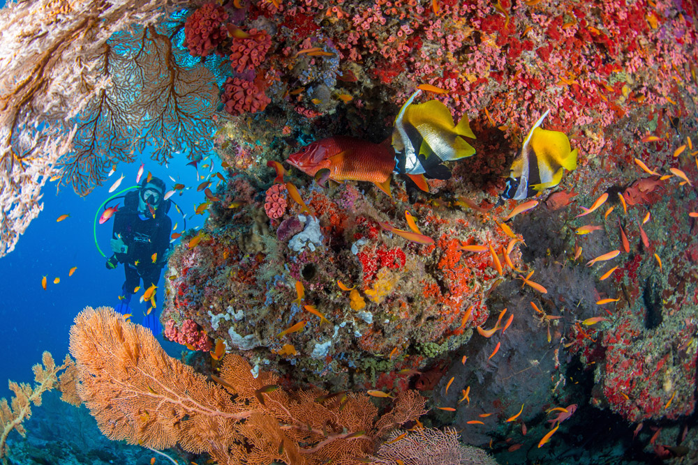 Eco Paradise Alphonse Island Opens Spectacular New Beach Villas 4
