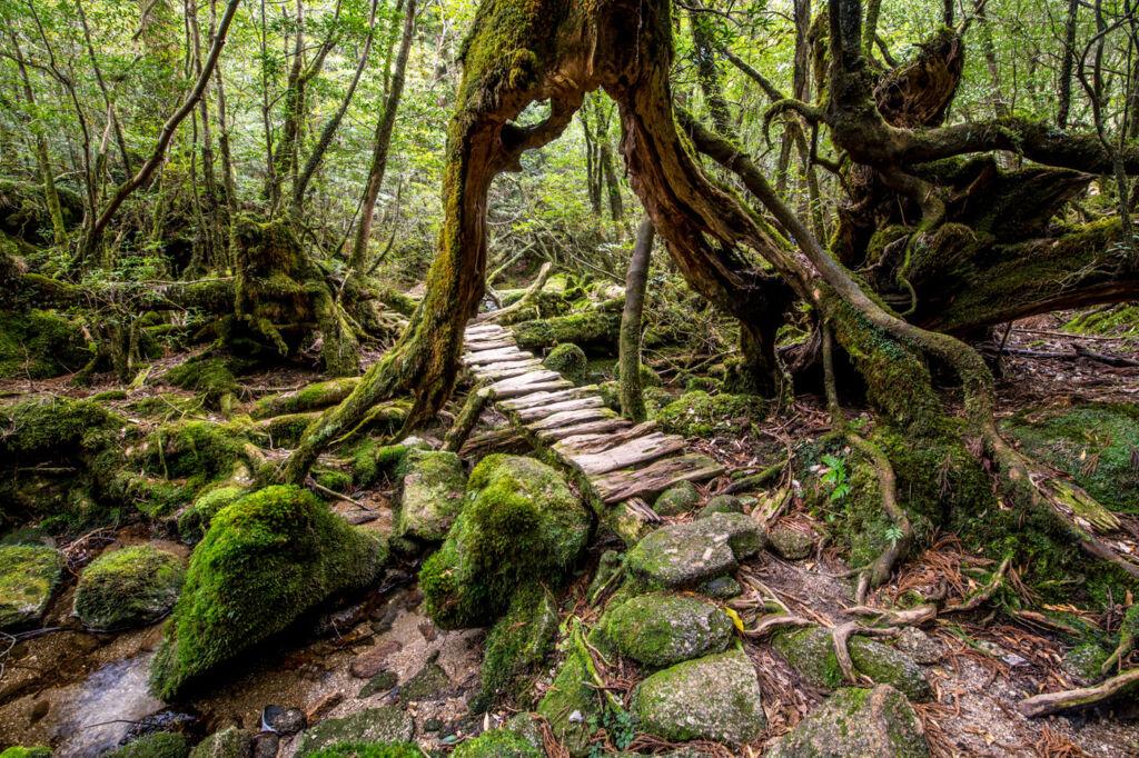 Visit Yakushima on Cookson Adventures Breathe Program