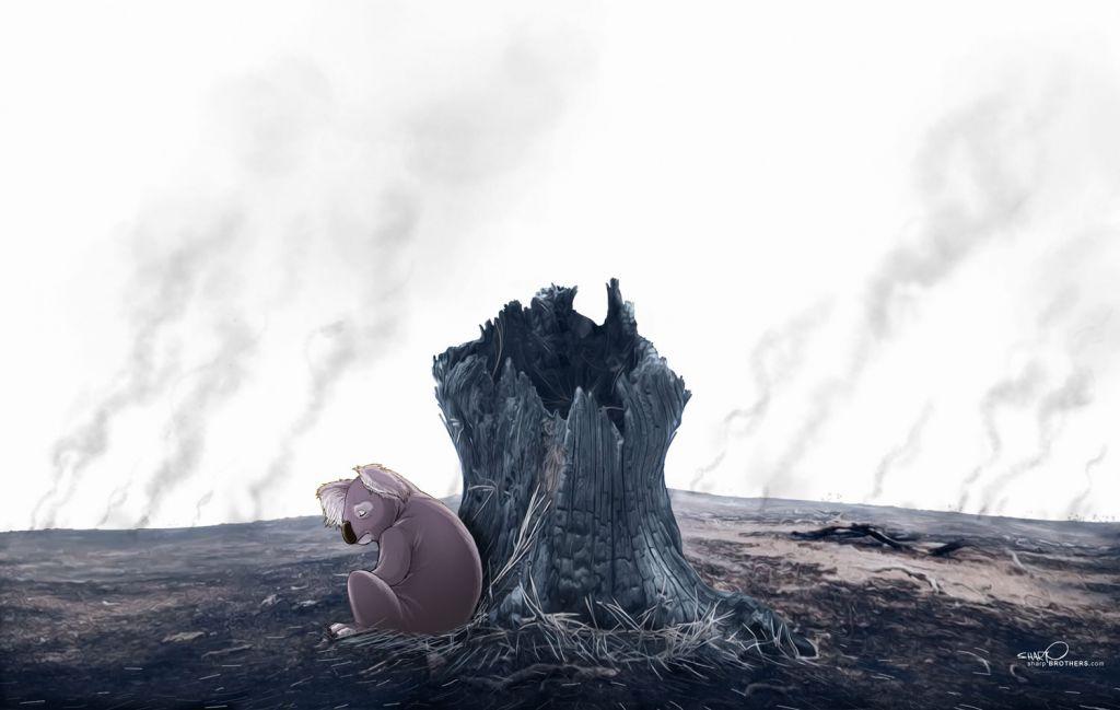 Koala imagery by Sharp Brothers Studio.