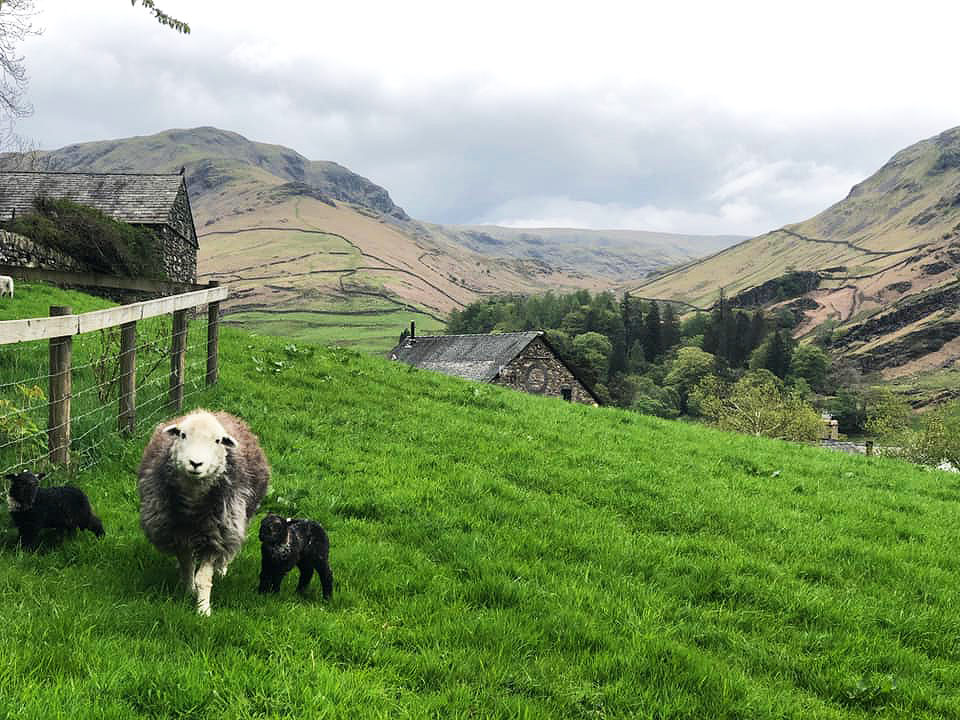 Views and local wildlife The Yan at Broadrayne in the Lake District