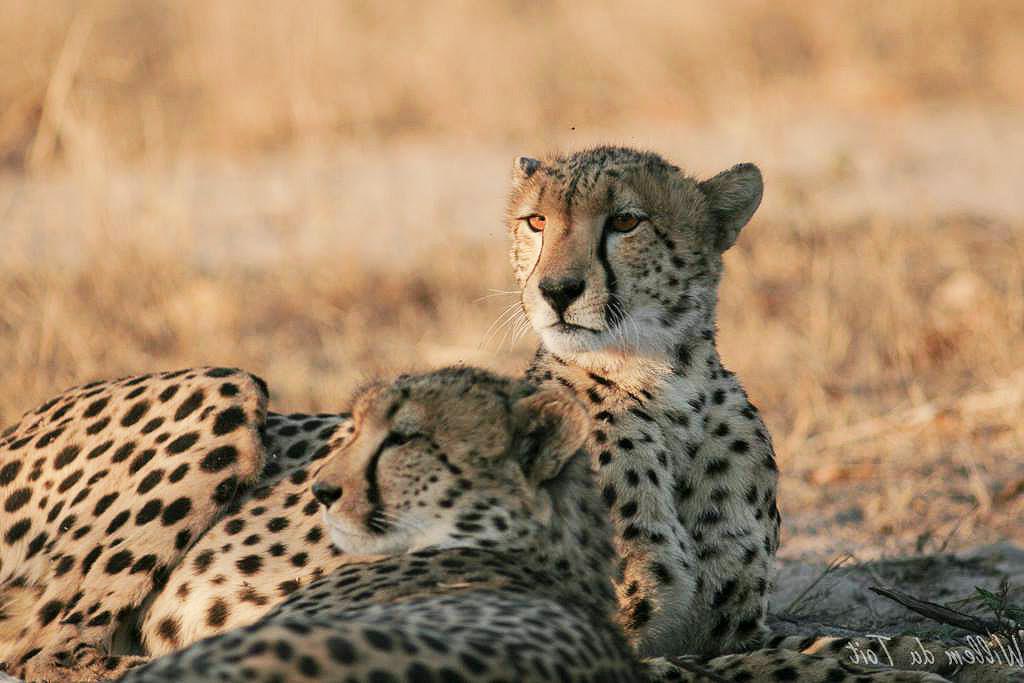 Cheetah Plains, South Africa