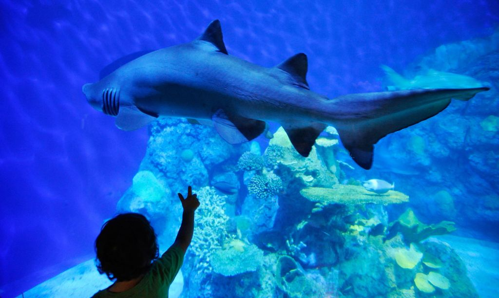 Dive with sharks at the the Denver Downtown Aquarium