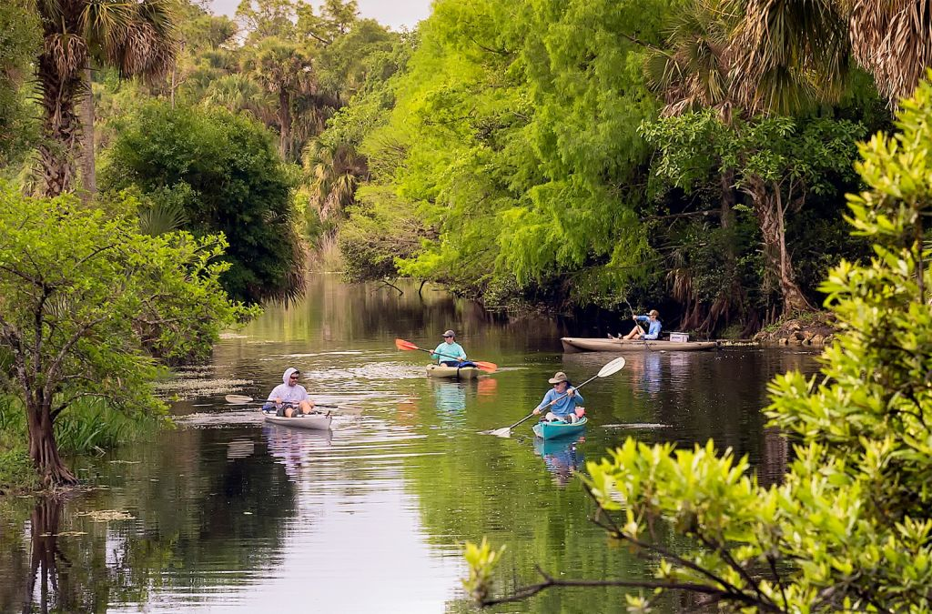 Kayaking in the Palm Beaches Mangroves