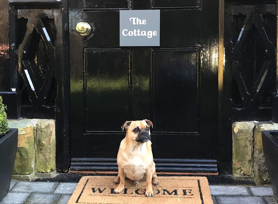 Pets are welcome at the Salomons Estate