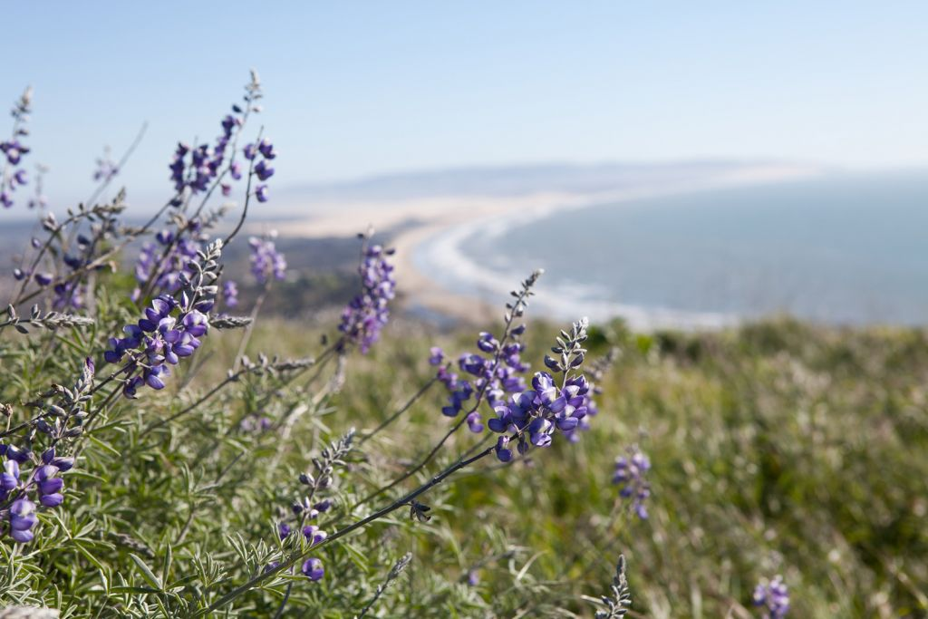 Flowers on the Pismo Preserve