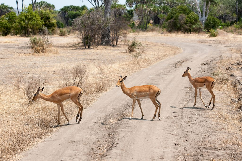 The local wildlife will be a big draw on the Southern Cross Safari