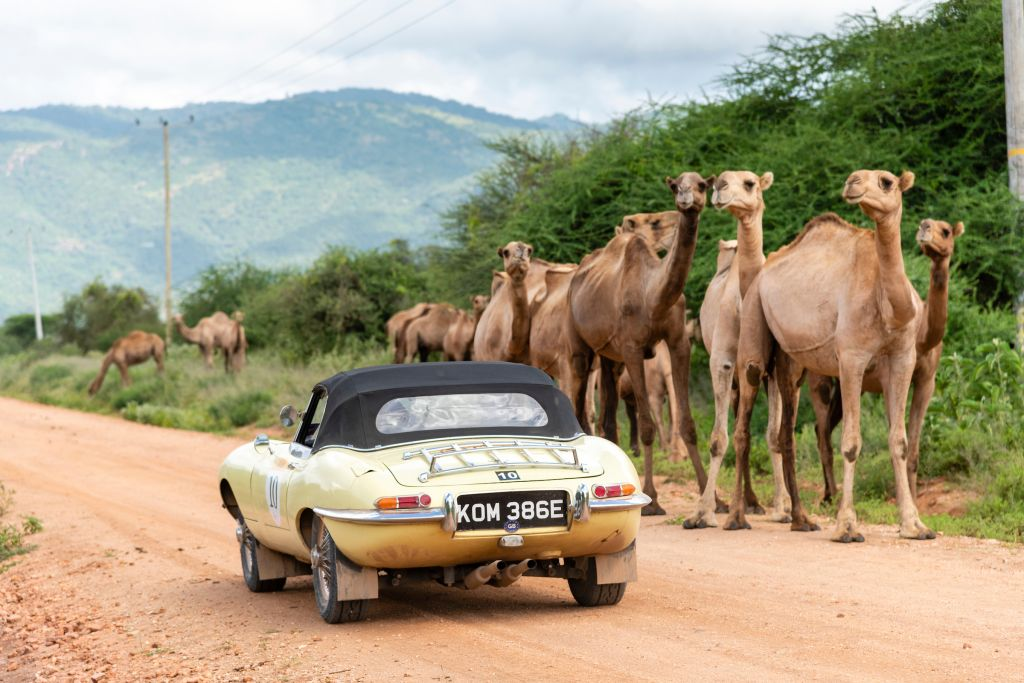 E type Jaguar in the Southern Cross Safari in Africa 2020