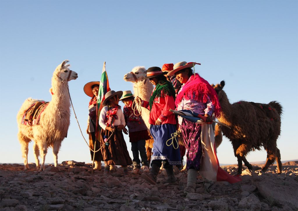 Llamas, Guanacos, Vicuñas and Alpaca in Chile