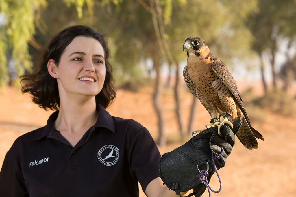 Falconry in Ras Al Khaimah UAE