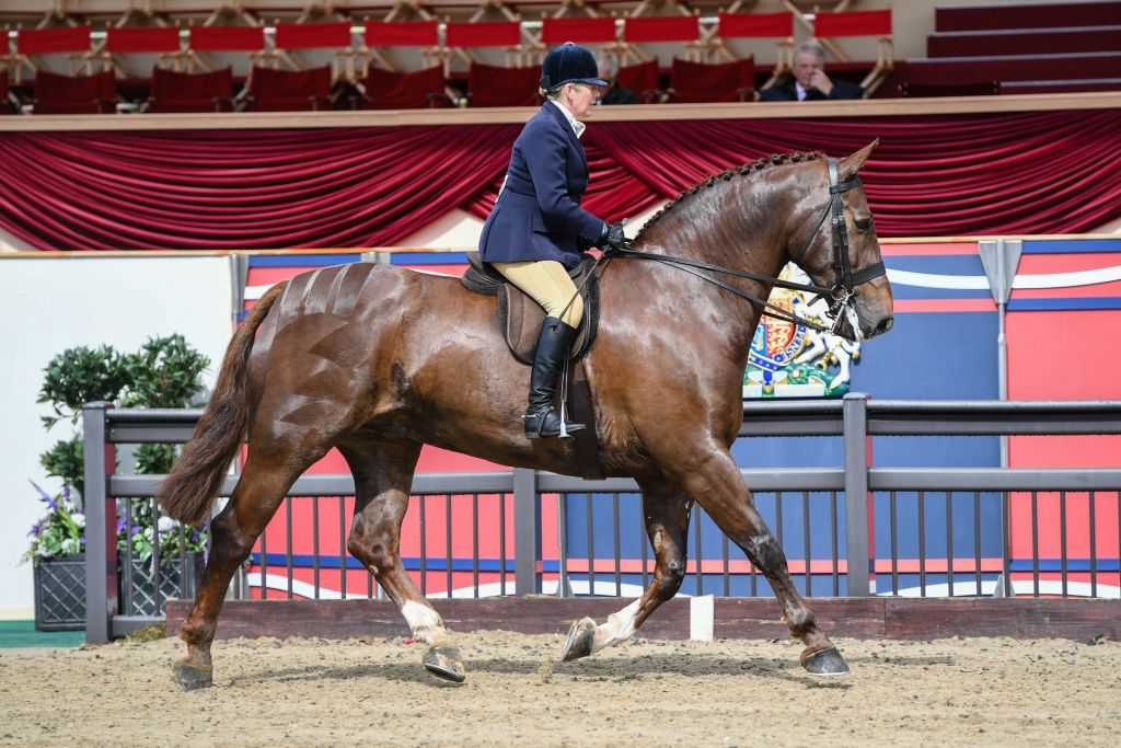 VIRTUAL WINDSOR 2020 show classes