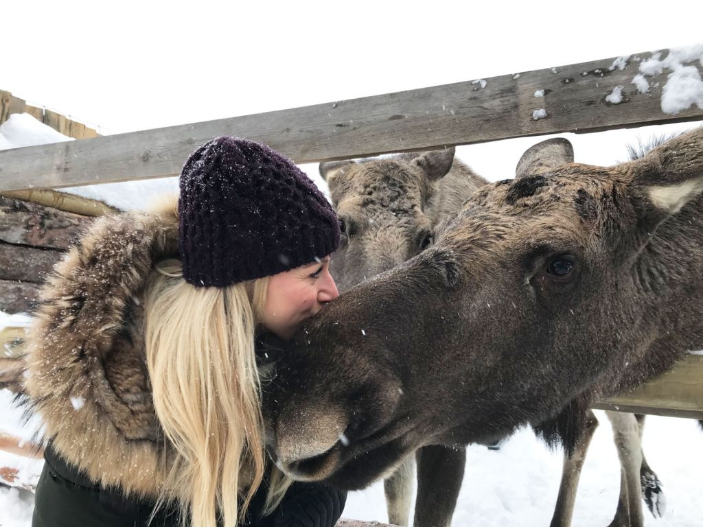 Meet a moose on the virtual holiday