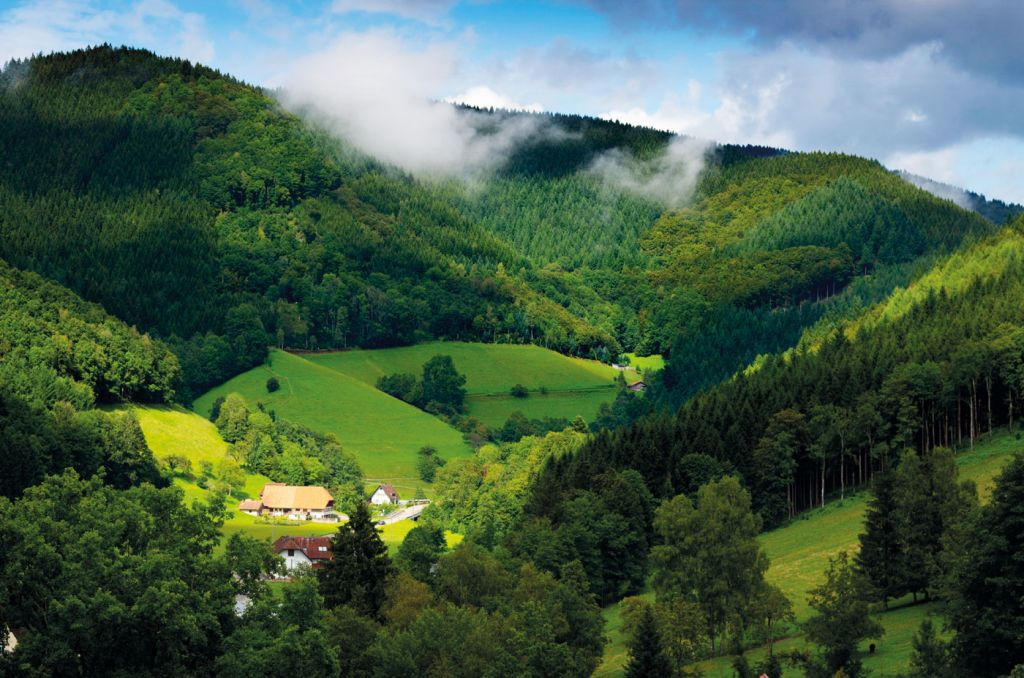 Hike in the evergreen Black Forest