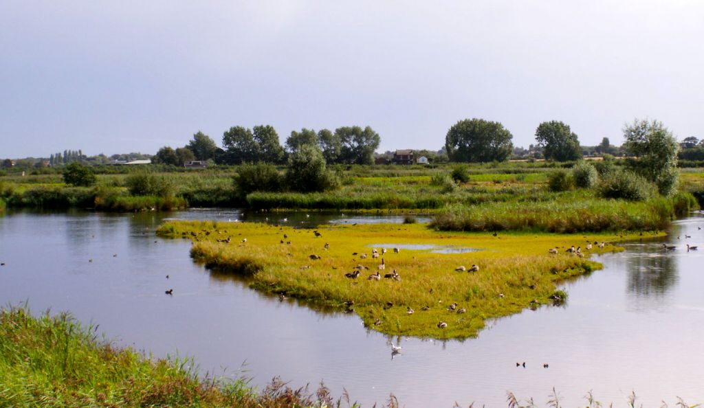 Lancashire's Martin Mere Wetland Centre Will Reopen on June 10th