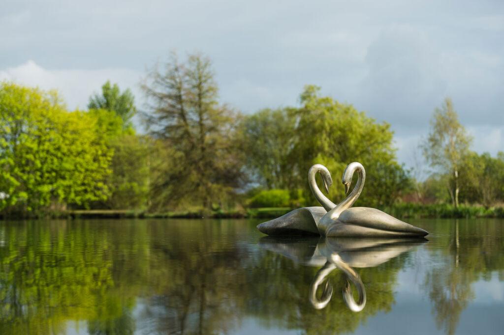 Simon Gudgeon Swans