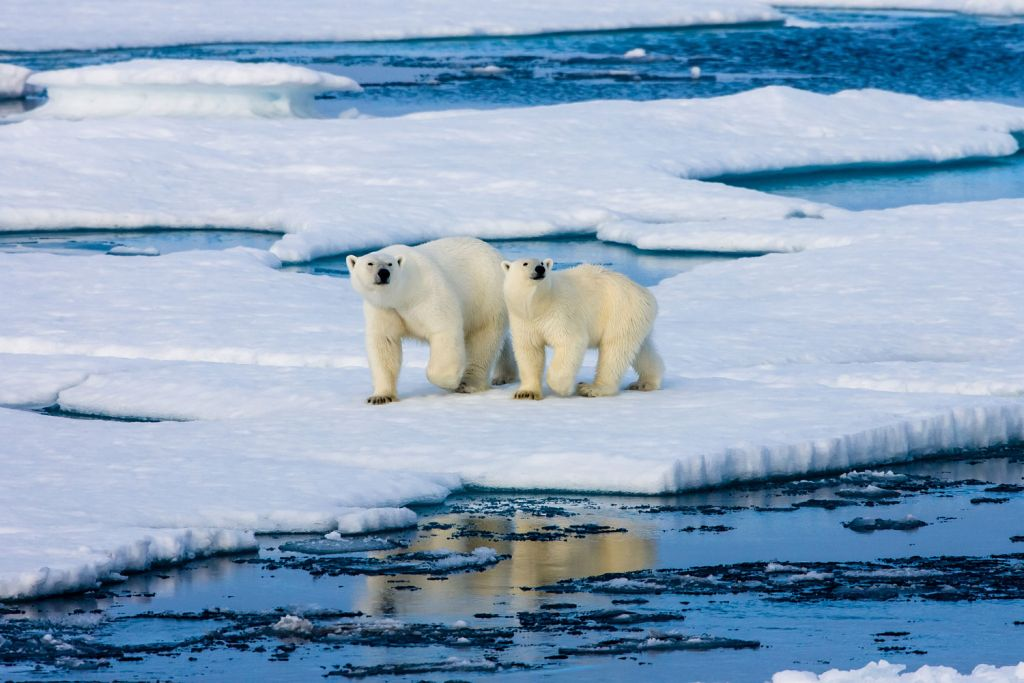 Take an expedition voyage to Antarctica
